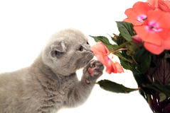 Citten que snuffing a flor imagens de stock royalty free