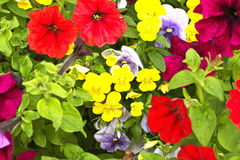 City ​​flowers. Colorful flowers in the city park Royalty Free Stock Photography