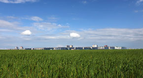 City. Growing behind wheat field Royalty Free Stock Images