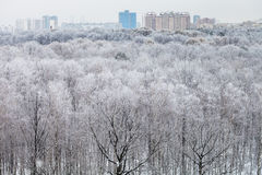 City and above view of forest covered by snow Royalty Free Stock Photo