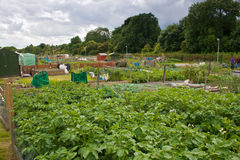 City allotments Royalty Free Stock Images