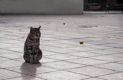 City animals - lone cat in the middle of square Royalty Free Stock Photos