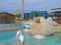 City of the Arts and the Sciences. Pelicans in City of the Arts and the Sciences - Valencia, Spain Stock Photos