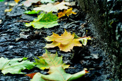City autumn - fallen maple leaves on the stone staircase Royalty Free Stock Photo