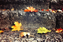 City autumn landscape - fallen maple leaves lying on the stone staircase Stock Photography