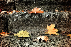City autumn landscape - fallen maple leaves on the stone staircase Stock Photo