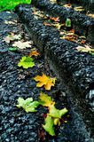 City autumn in the park - fallen maple leaves on the stone staircase Stock Photo