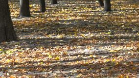 City autumn park stock footage