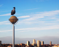 City behind. Picture of the seagull and city at the back Stock Photography