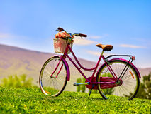 City bicycle with flower basket on green grass aganist blue sky. Royalty Free Stock Photos