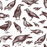 City birds pattern. Vector seamless pattern with hand drawn eating city birds. Beautiful chalk drawing, perfect for prints and patterns Royalty Free Stock Photography