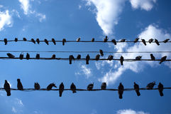 City Birds Sitting on Wires Royalty Free Stock Photography