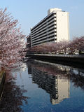 City Building Reflection In Spring Stock Photos