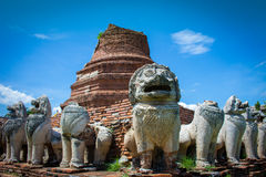 City building remain of Temple in Ayutthaya, Historical Park in Stock Images