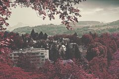 City Buildings Surrounded Maroon Leaved Forest during Daytime Stock Photo