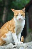 City cat Royalty Free Stock Photo