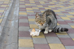 City cat fears that someone would take away its lunch Stock Photo