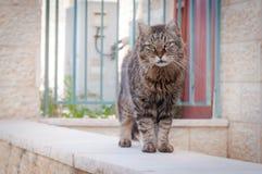 City cat Royalty Free Stock Photography