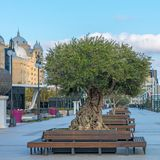 City Centre Refurbishment with new park Royalty Free Stock Photography
