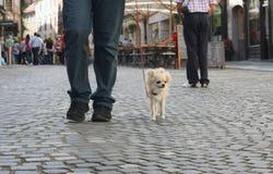 City dog walk Royalty Free Stock Photos
