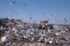City dump 28. City dump.Gulls Stock Images