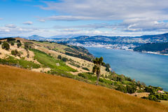 Dunedin and Otago Harbour South Island New Zealand. City of Dunedin and Otago Harbour seen from Otago Peninsula  South Island  New Zealand Stock Photography