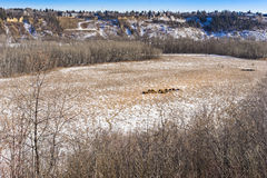 City of Edmonton natural area park Royalty Free Stock Photography