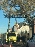 City environmental cutting branches tree service. There are many accidents happened due to falling branches of the trees during wind or snow storms in New York Royalty Free Stock Images