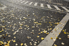 City fall. Autumn city streets in the morning royalty free stock image