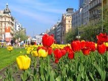 City flower stock image