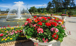 City flower garden in Dalat, Vietnam Royalty Free Stock Images