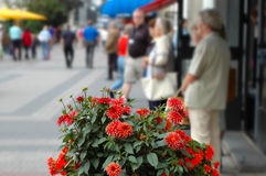 City flowers. Blooming colorful dahlias make out the beautiful Royalty Free Stock Photography