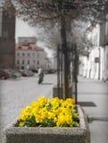 City flowers. Stock Photo
