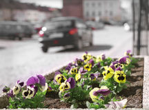 City flowers. Stock Photos