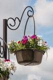 City flowers. Flowers as a city ornament in a metal pot against the sky Stock Images