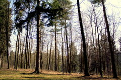 City forest park royalty free stock photo