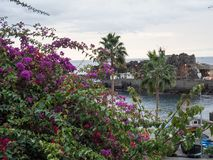 The portugese island of madeira. The City of funchal and the portugese Island of madeira Royalty Free Stock Photos