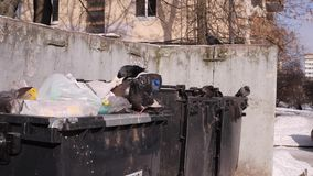 City garbage cans. Birds dig garbage bags. The concept of global pollution and consumer society. 240 fps slow motion. City garbage cans. Birds dig garbage bags stock video