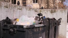 Birds dig garbage bags. garbage cans in city dump. The concept of global pollution and consumer society. 4k UHD 3840. City garbage cans. Birds dig garbage bags stock footage