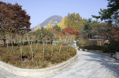 City garden in autumn colors in Seoul Royalty Free Stock Images