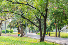 City garden. Landscape green park with many tree and relaxation atmosphere Royalty Free Stock Image