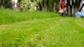 City gardener in uniform starts lawnmower. Man cutting grass. Urban scene. City gardener in uniform starts lawnmower. Man cutting grass. Lawnmowing activity stock video footage