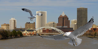 City Gulls Stock Photography