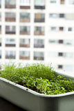 City herb garden Royalty Free Stock Photo