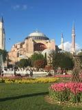 Hagia Sophia and tulips stock photography