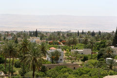 City Of Jericho, Israel. Surrounded by desert, palm trees and lush vegetation abounds in the spring feed city of Jericho, Israel Stock Photo