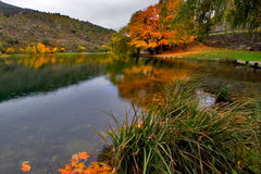 City lake. Orange and yellow leaves by the lake Royalty Free Stock Photo