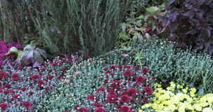 Flowerbeds and trees with bushes in the city park stock video footage