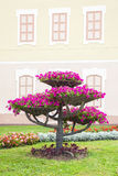 City landscape design. Flower pots with petunia on tree. Royalty Free Stock Images