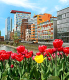 City landscape with tulips and modern architecture in Dusseldorf Royalty Free Stock Images